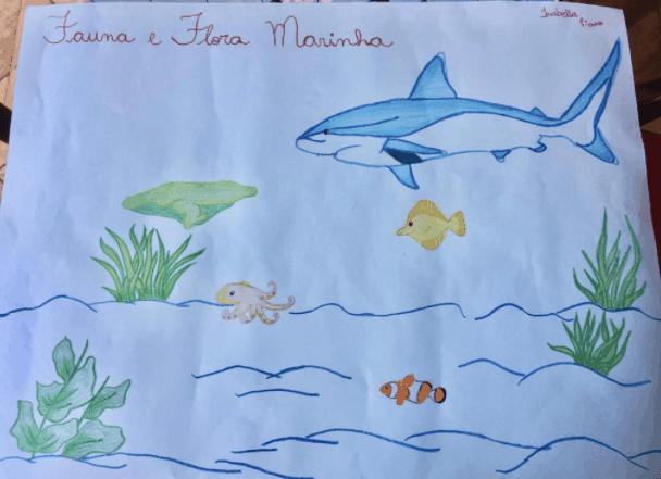 256 Isabela 13 Santa Adelia SP Lapisde Cor E Cantinha Colorida Fauna E Flora Marinha